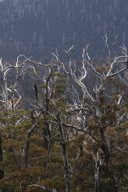 bSkeletonTrees