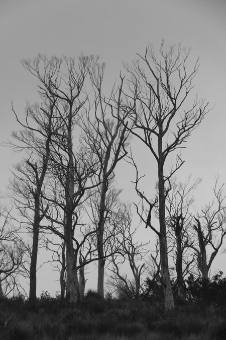 bIMG_1429SkeletalTrees